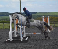 Unaffiliated Showjumping Competition