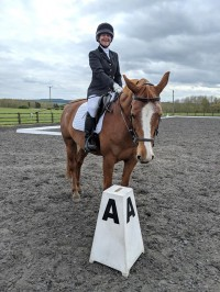 Dressage Board Hire