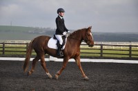 Summer Dressage Competition